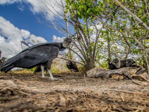 Everglades1 123