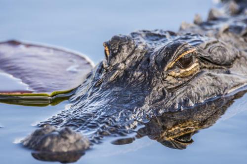 Everglades1 41
