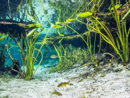FloridaOCCALAUnderwater 21