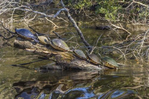 Floridawatermanagement 9