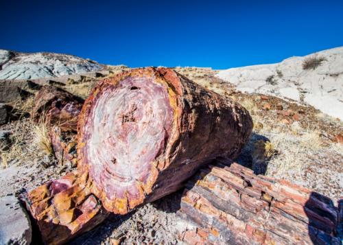 PetrifiedForest 1