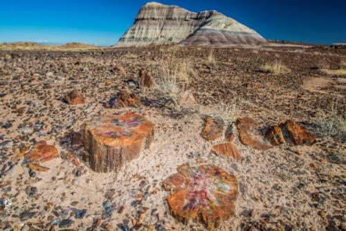 PetrifiedForest 3