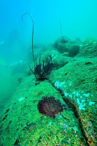 Sri lankabpod vodou17