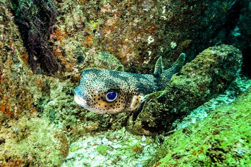 Sri lankabpod vodou2
