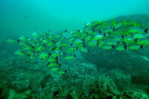 Sri lankabpod vodou7