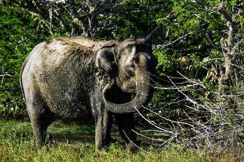 Sri lankabundalaa41